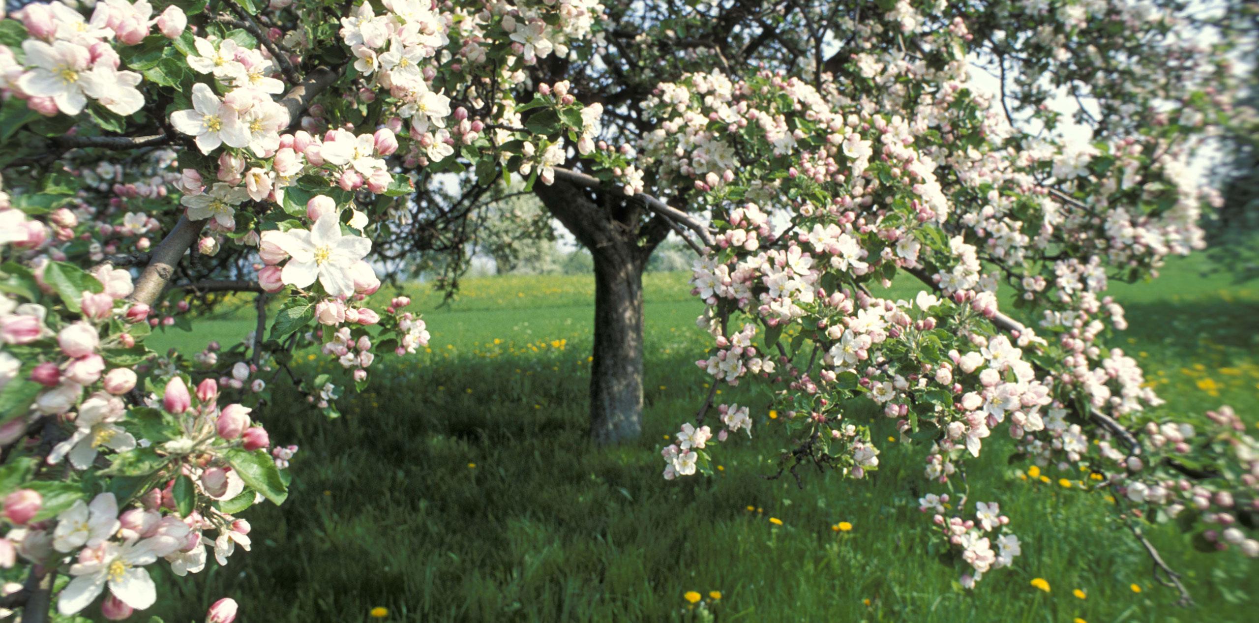 Streuobst Baum Startbild